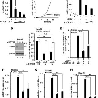 Overexpression of CRTC coactivators promoted HBV