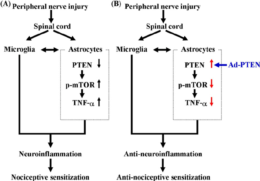 Schematic representation of the possible mechanisms of