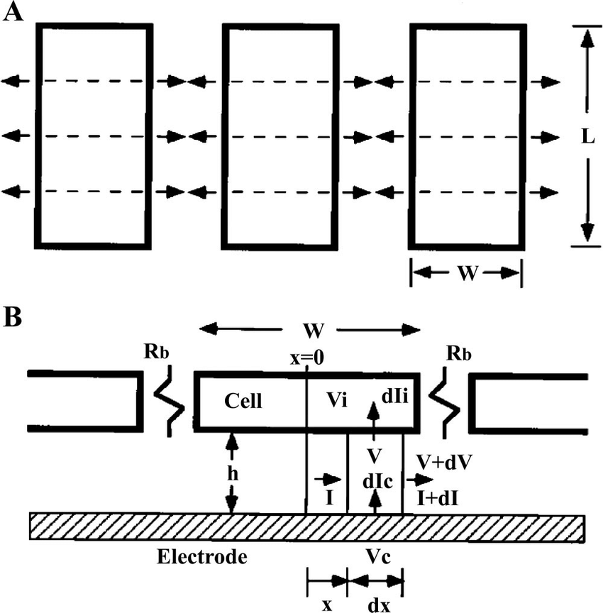 A schematic diagram of the cell-electrode model for cell