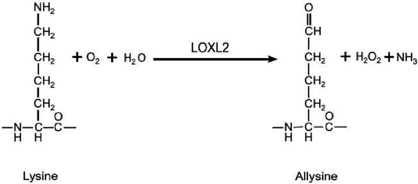 Chemistry involved in the detection of LOXL2 using an