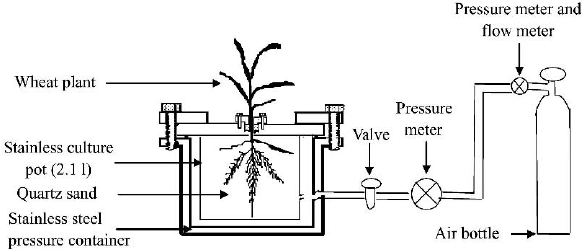 Diagram of the pressure chamber designed to collect xylem