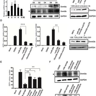 Dnmt3a and Dnmt3b inhibit iPSC generation. (A, B