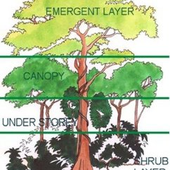 Diagram Of A Tropical Forest Vauxhall Astra H Wiring Showing The Different Levels Vegetation In