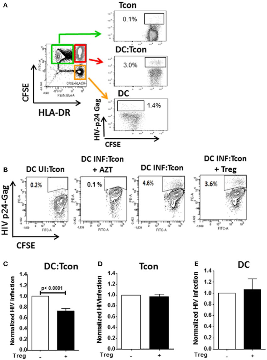 hight resolution of  infection of dc tcon clusters is decreased by treg but infection of download scientific diagram