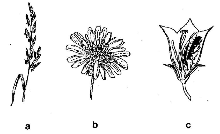 Flowers of wind-pollinated plants (a) are distinctly