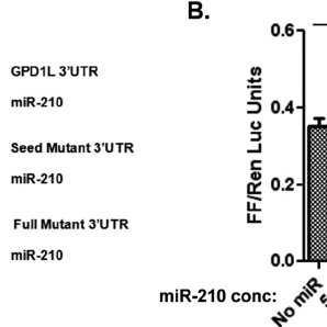 Increased expression of GPD1L results in increased HIF-1