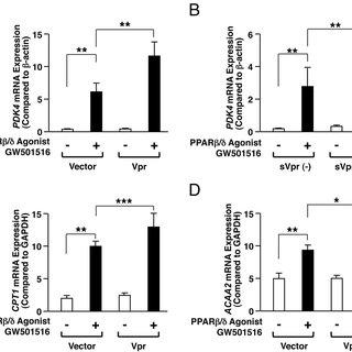 Vpr enhances HADH enzymatic activity in PPAR/-transfected