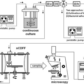 (PDF) Reproducible Biofilm Cultivation of Chemostat-Grown
