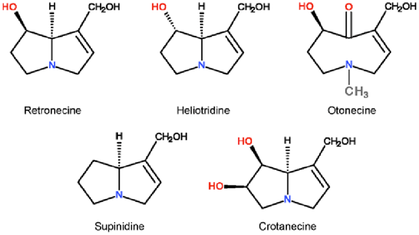 The structures of major 1, 2-unsaturated necines