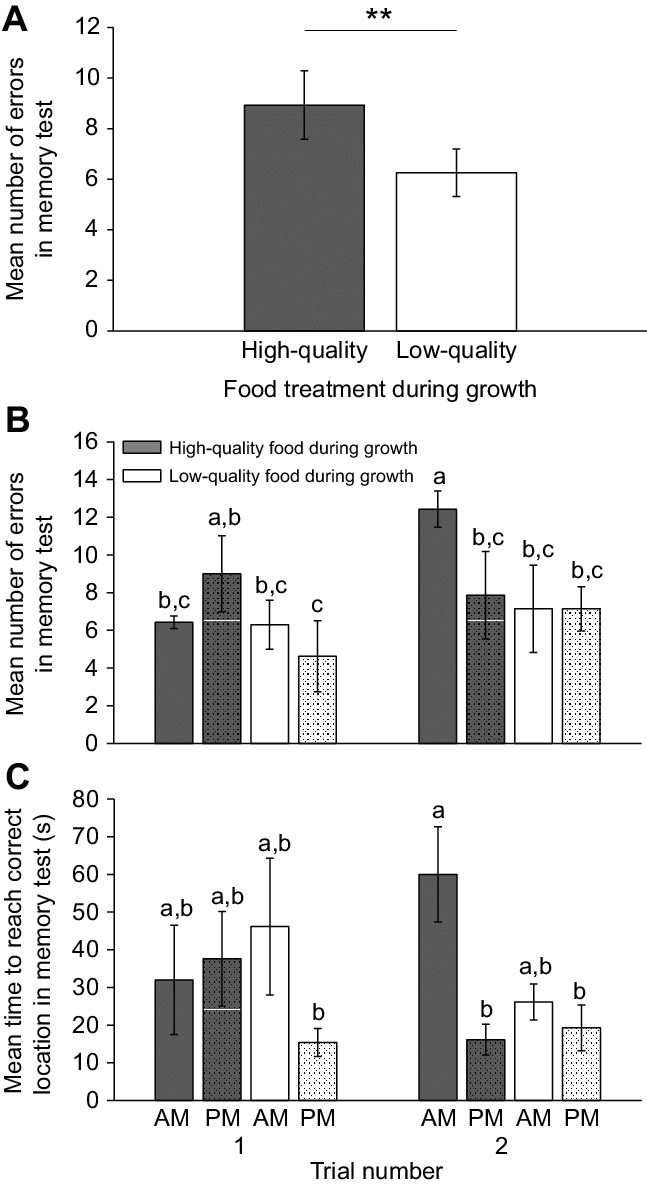 The performance in a memory task of pigeons raised with