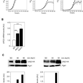 (PDF) E4-Ubiquitin ligase Ufd2 stabilizes Yap8 and