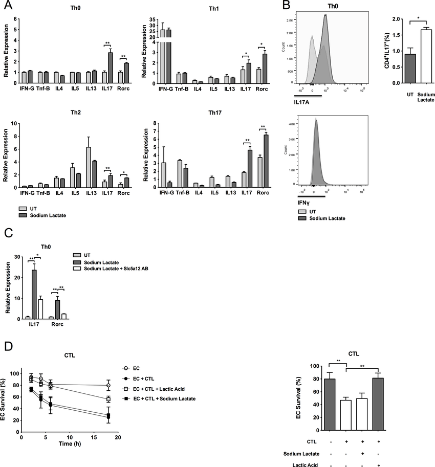 Lactate modulates effector T cell functions. (A) Relative