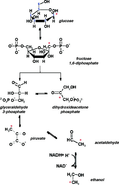 Metabolic pathway of glucose-to-ethanol fermentation by S