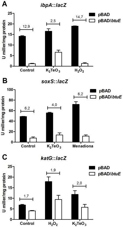 β-galactosidase activity was assayed as described [39] in