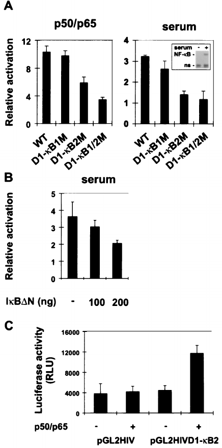 NF-κB Function in Growth Control: Regulation of Cyclin D1