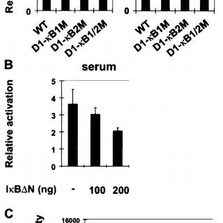 (PDF) NF-κB Function in Growth Control: Regulation of