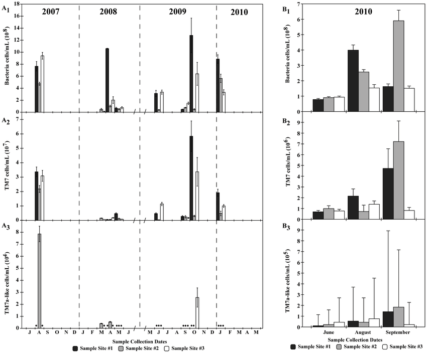 Quantification of Bacteria, TM7, and TM7a-like phylotypes