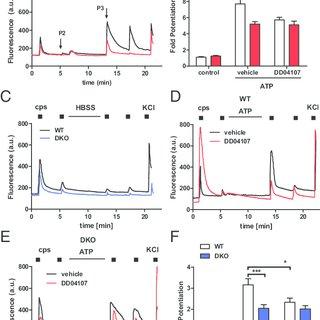 (PDF) αCGRP is essential for algesic exocytotic