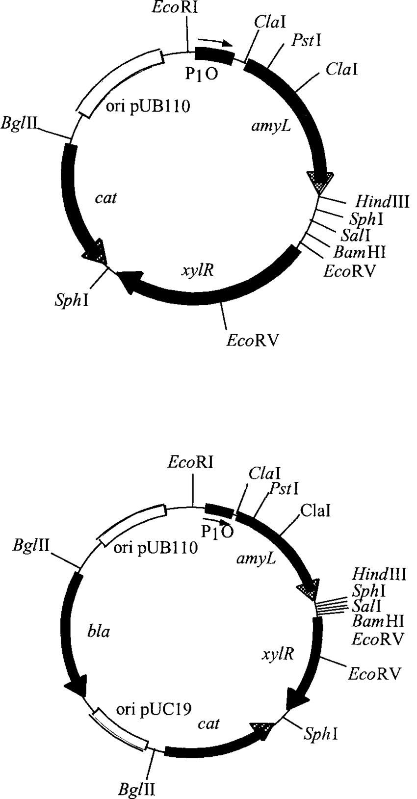 Schematic diagrams of the expression vectors pCJ92 (a) and