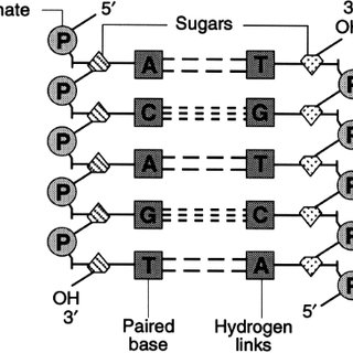 (PDF) Genetic engineering of human FSH (Gonal-F)