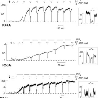 (PDF) The Role of NH2-terminal Positive Charges in the