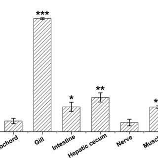 Relative expression levels of Bb24355 gene in various