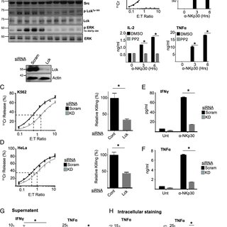 DOCK8 is required for optimal Src kinase activation. (A