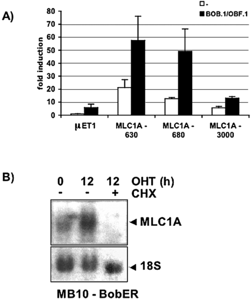small resolution of regulation of mlc1a promoter activity as well as gene expression by download scientific diagram
