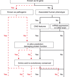 flow diagram showing step by step variant classification of segregating recessive sequence variants  [ 850 x 1183 Pixel ]