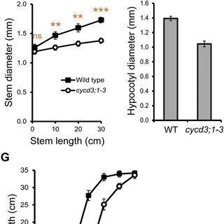 CYCD3 genes are specifically expressed in the procambium