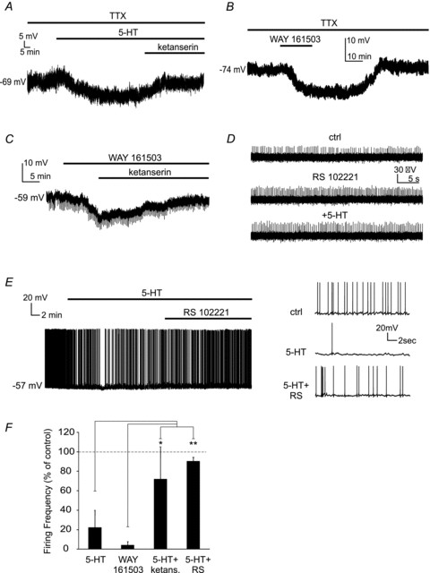 The effects of serotonin on LTSIs are mediated by 5-HT2C