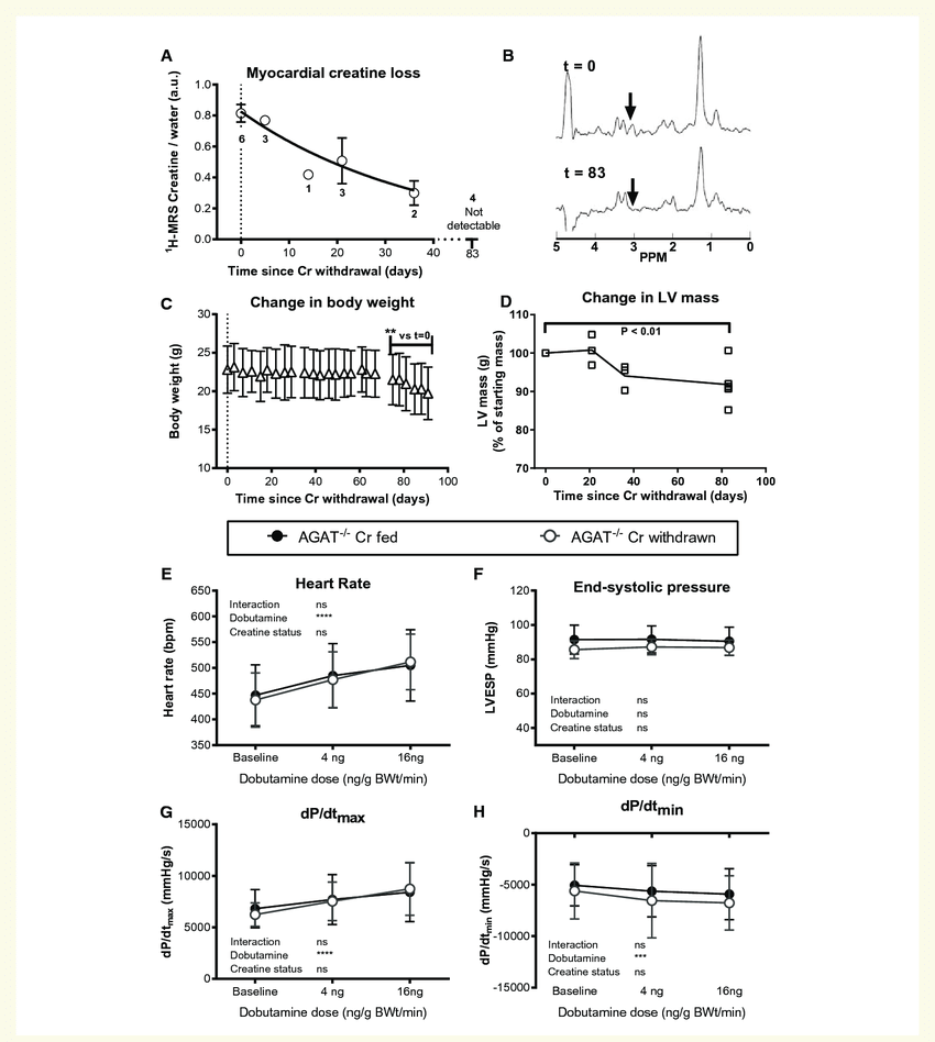 Withdrawal of dietary creatine in AGAT-/-mice reduces body ...
