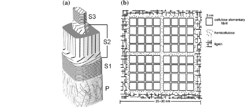 (a) Schematic design of the cell wall of a softwood fibre