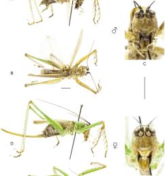 habitus of listroscelis sooretama sp nov a c holotype male a download scientific diagram [ 850 x 1184 Pixel ]