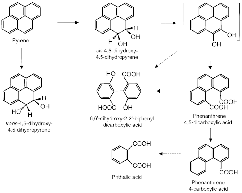 Schematic pathway proposed for the degradation of pyrene