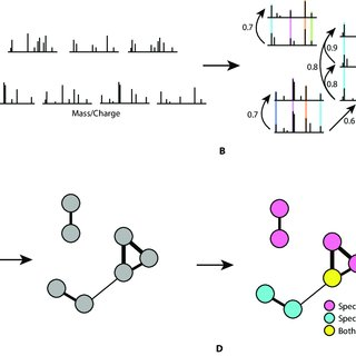 The generation of molecular networks based on mass