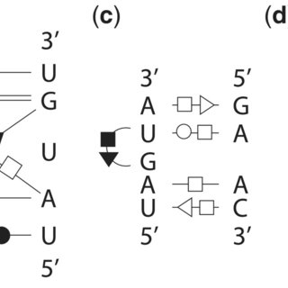 Base-pairing patterns of the query motif structures in 2D