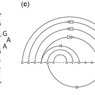 (PDF) RNAMotifScan: Automatic identification of RNA