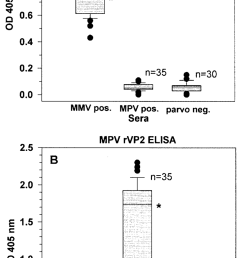 serum antibody responses of mice experimentally infected with mmv or mpv or of uninfected mice tested [ 850 x 1672 Pixel ]