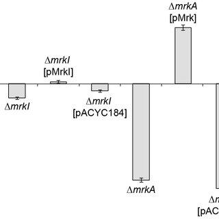 Model of c-di-GMP-mediated control of type 3 fimbriae