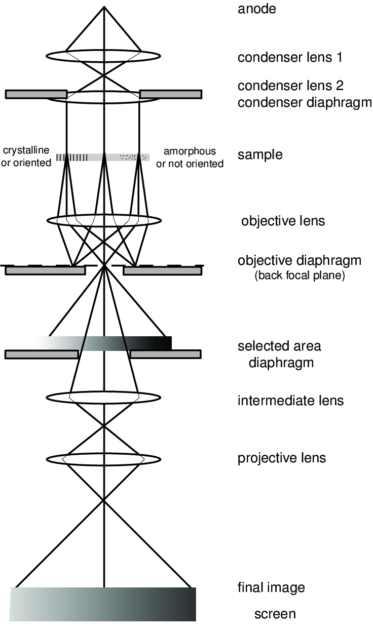 7 Ray diagram for a transmission electron microscope in