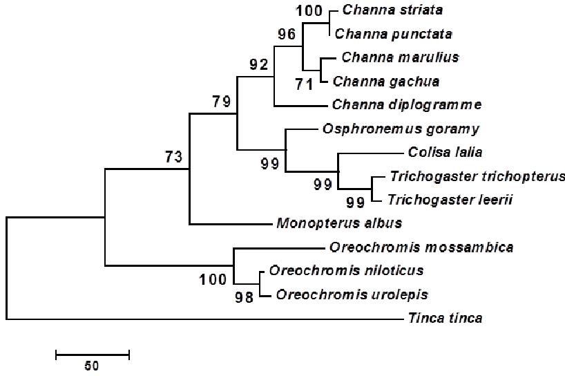 Molecular phylogenetic anaylsis of ornamental fish gh . A