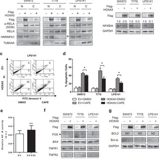 (PDF) Induction of p53-independent apoptosis by ectopic