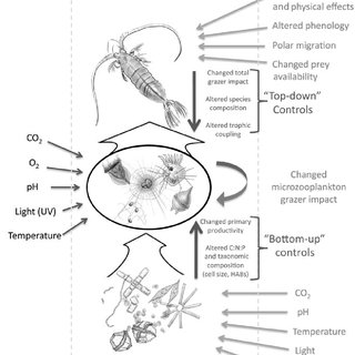 (PDF) The effects of changing climate on microzooplankton