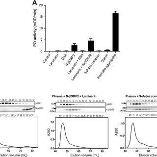 (PDF) Protein self-association of N-terminal domain of