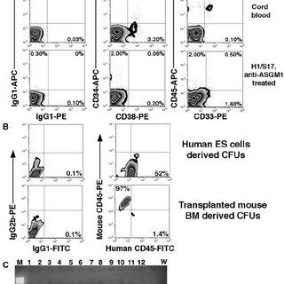 Representative flow cytometric evaluation of human CD45 ϩ