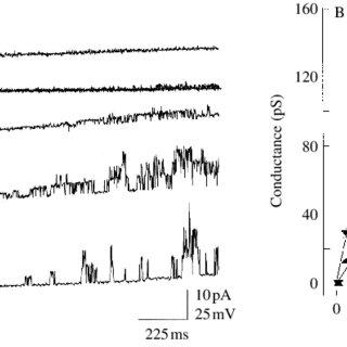 (PDF) Pore properties of Lymnea stagnalis neuron stretch