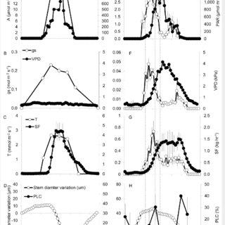 (PDF) Diurnal dynamics of water transport, storage and