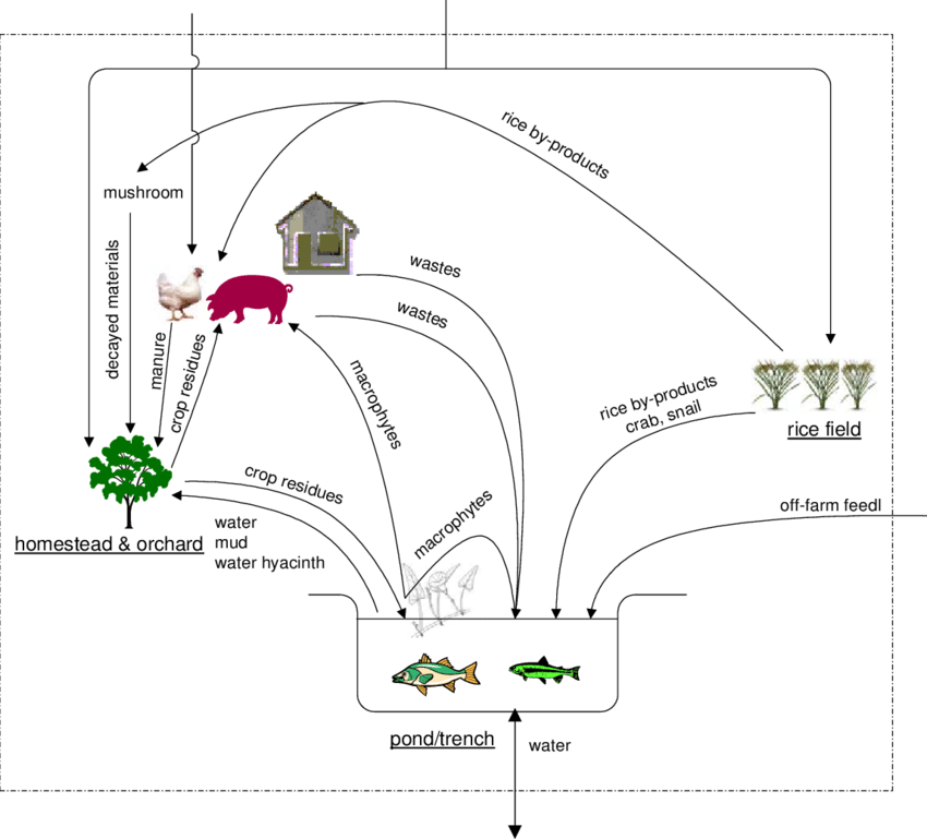 A bio-resource flow diagram showing interactions of