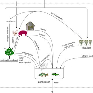 (PDF) Development of